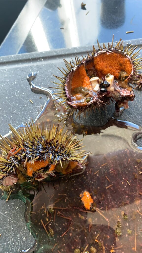 Sea urchin in Greenland.